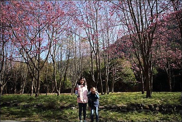 武陵農場櫻花季 (88).jpg