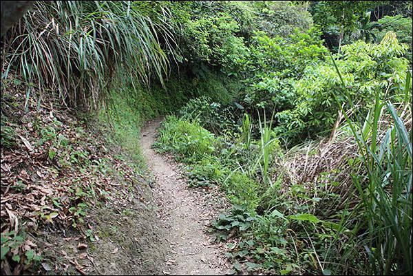 竹坑渓步道 (13).jpg