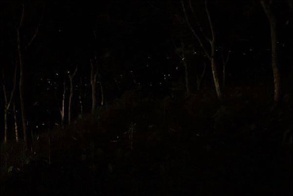 泰安覓境露營區 (93).jpg