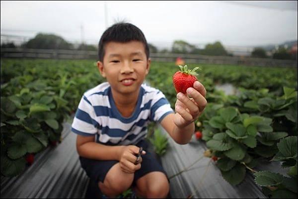 福基草莓園 (2).jpg