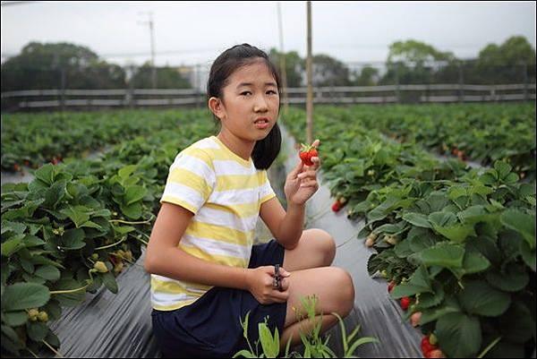 福基草莓園 (3).jpg