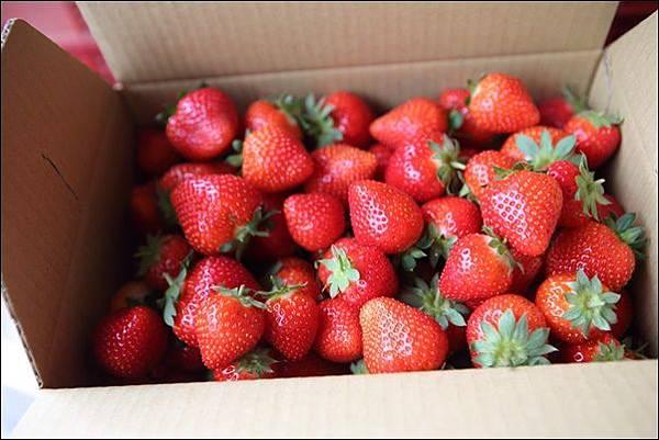 福基草莓園 (5).jpg