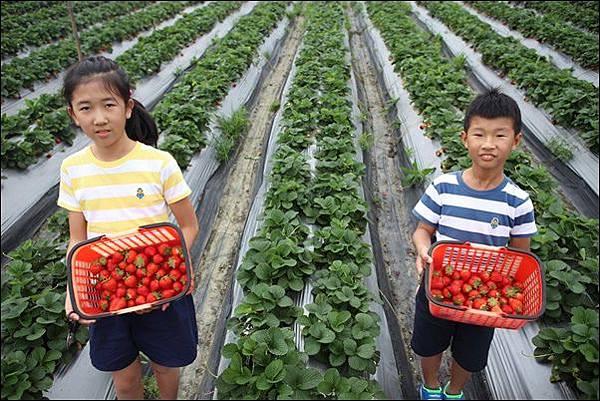 福基草莓園 (4).jpg