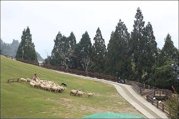 清境農場 (5).jpg