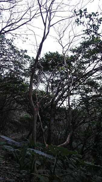 步道寫景 (2).JPG