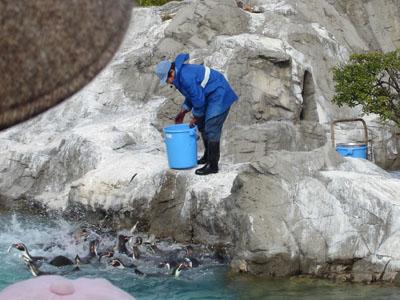 企鵝餵食1vv