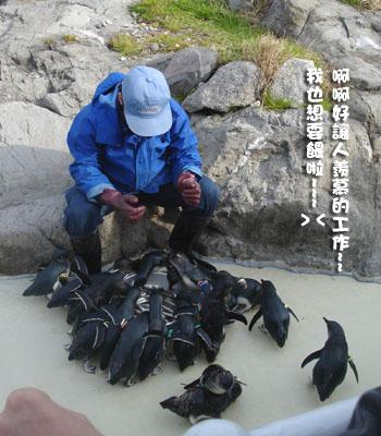 企鵝餵食2vv