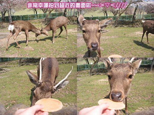 餵鹿餵鹿~~~~>▽<////