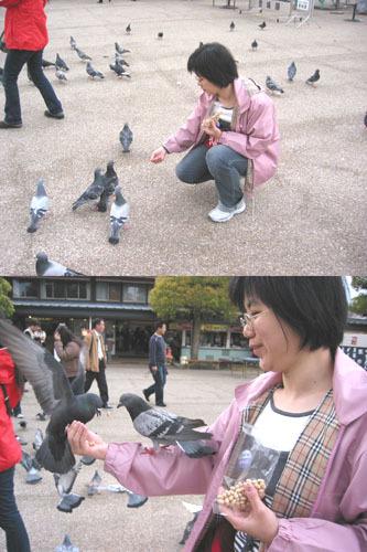 餵鴿子餵鴿子~~~>w<//////