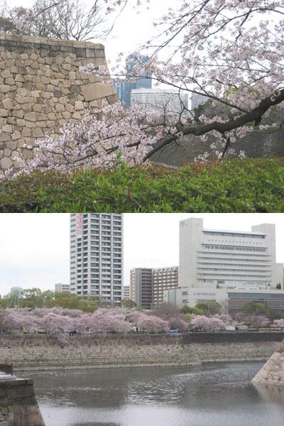 大阪城護城河與櫻花vv