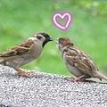 親鳥餵小鳥vv