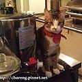 150912-Minou貓餐廳-8.jpg