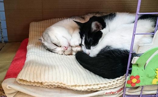 160326-金興發的貓.jpg