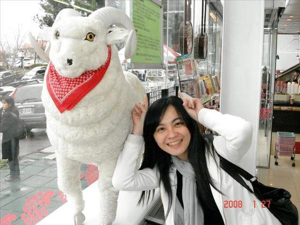 可愛的羊咩咩