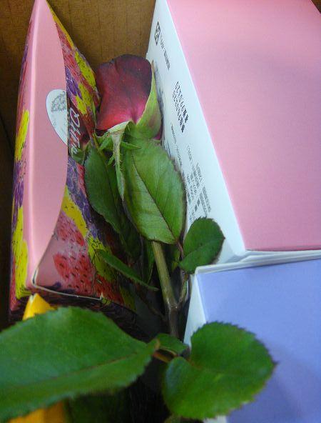 06.是紅色玫瑰花耶.jpg