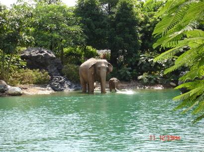 超像真的大象滴
