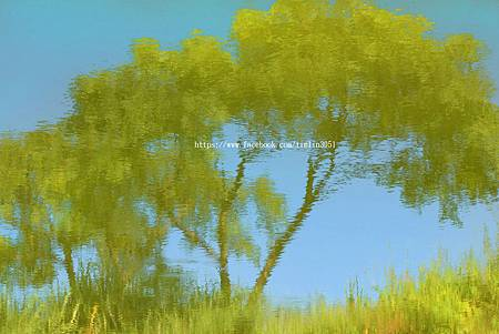 新屋蓮園-秋荷池畔