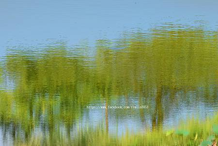 初秋荷池畔