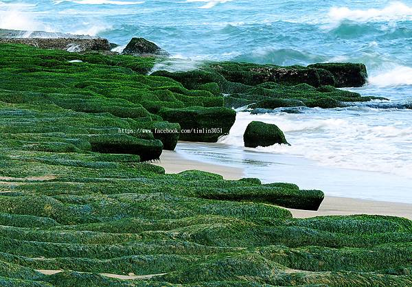 老梅-綠石槽-初春