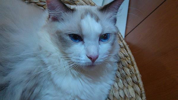 水藍的眼睛