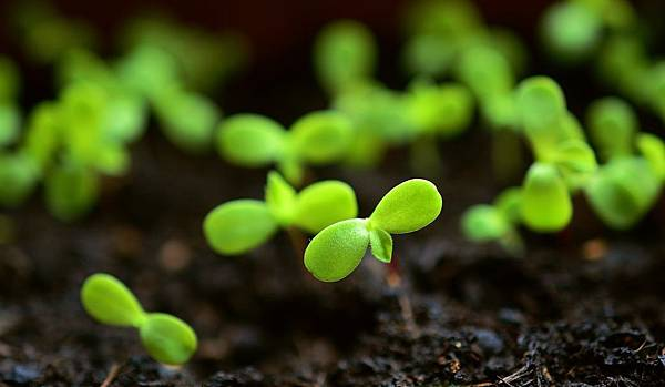 plant-4036131_1280.jpg