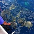 07_成群結隊的燕魚.jpg