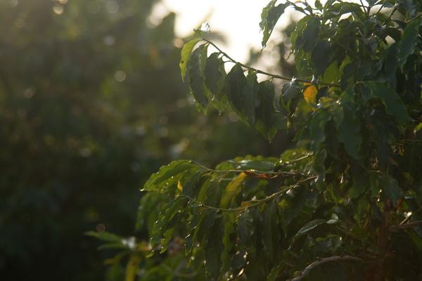 2009-10-25-東山咖啡節16.JPG