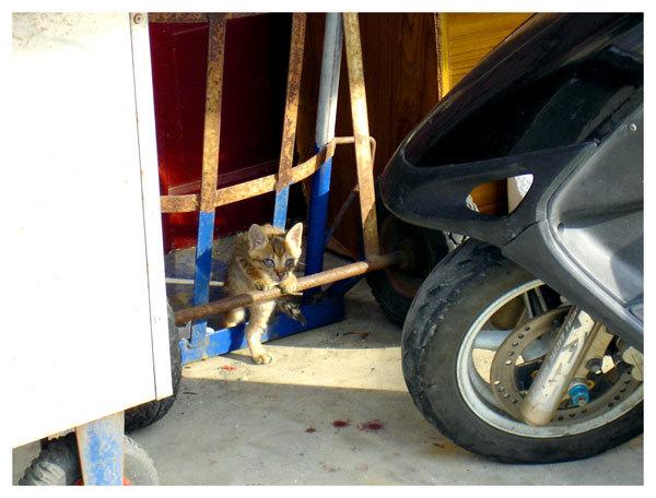 路邊人家裡的可愛小貓