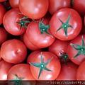 牛番茄2.jpg