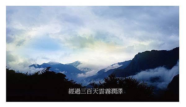 洗潔精-01