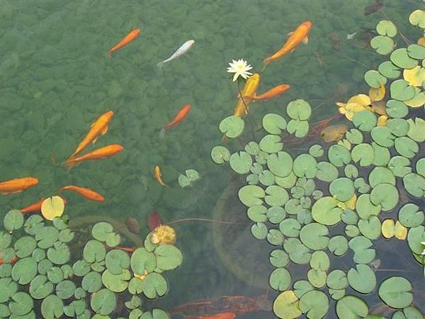山水園池塘.jpg