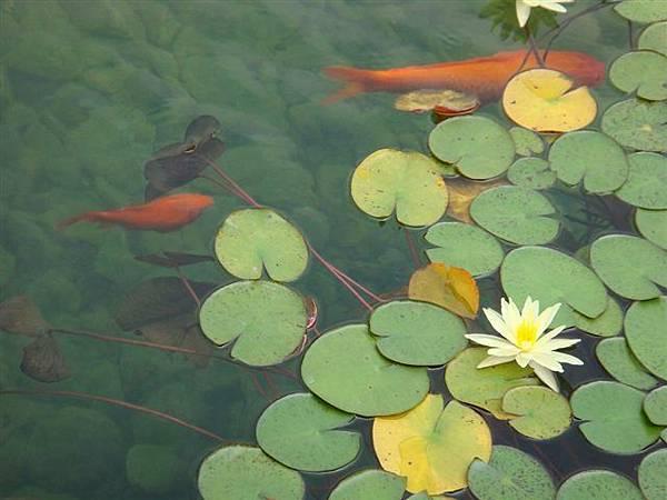 山水園池塘2.jpg