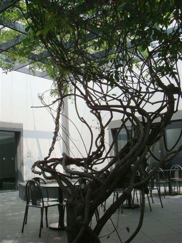 博物館紫藤園.jpg