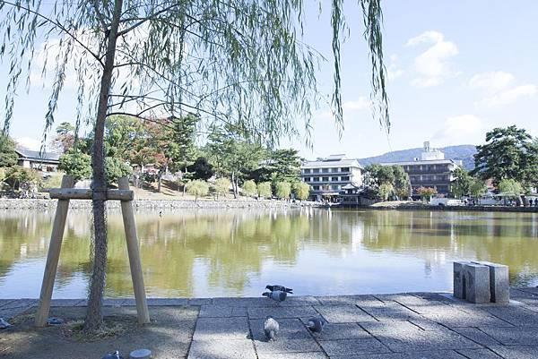 奈良2015玄蕎麥麵及公園鹿群 - 48