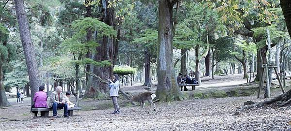 奈良2015玄蕎麥麵及公園鹿群 - 21