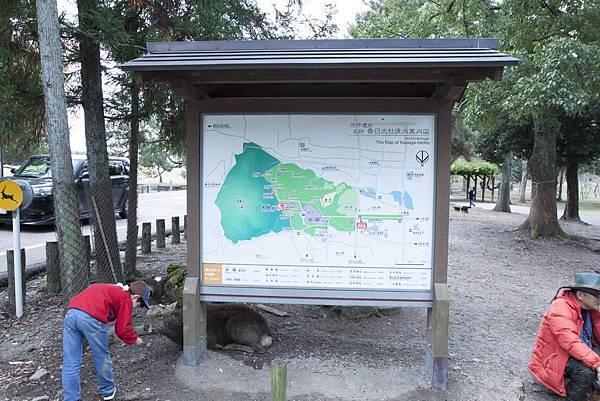 奈良2015玄蕎麥麵及公園鹿群 - 17