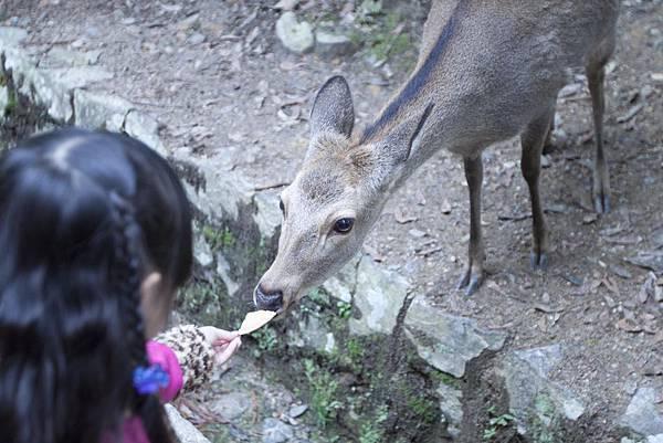 奈良2015玄蕎麥麵及公園鹿群 - 16