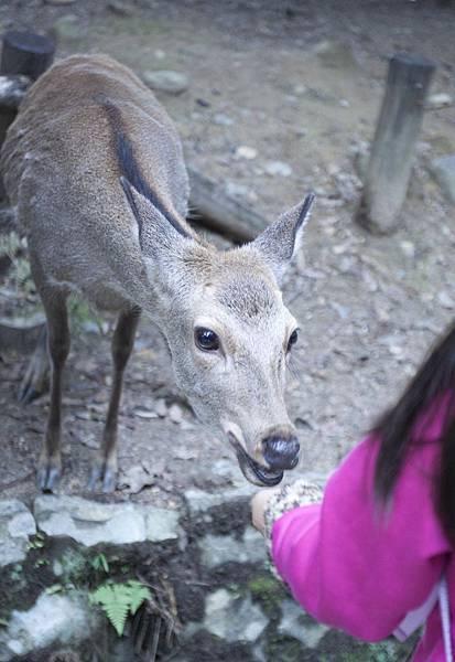 奈良2015玄蕎麥麵及公園鹿群 - 15