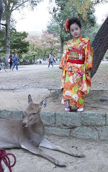 奈良2015玄蕎麥麵及公園鹿群 - 9