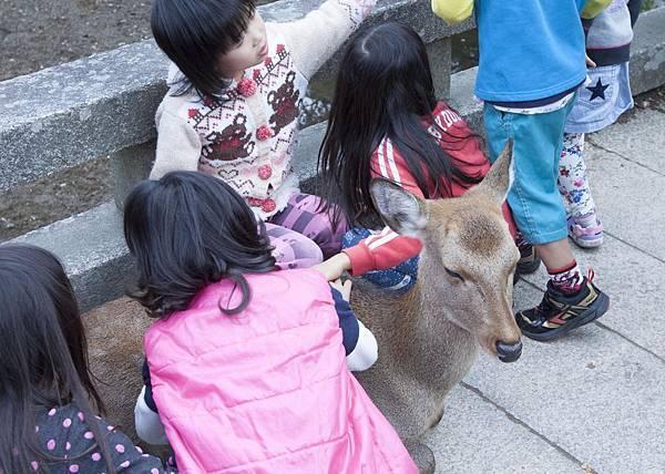 奈良2015玄蕎麥麵及公園鹿群 - 8