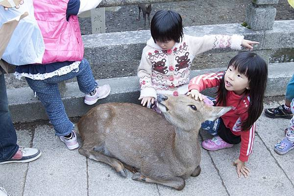 奈良2015玄蕎麥麵及公園鹿群 - 7