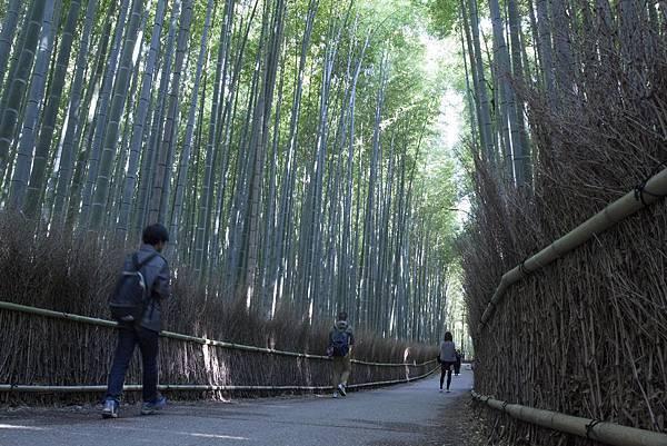 嵐山竹林 - 1