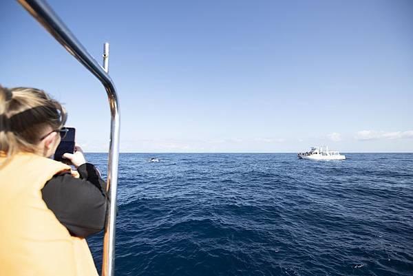 Okinawa 賞鯨 - 3