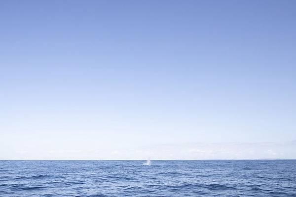Okinawa 賞鯨 - 5