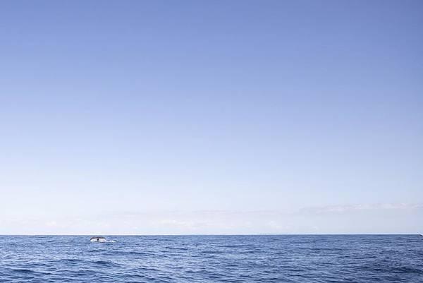 Okinawa 賞鯨 - 4