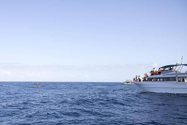 Okinawa 賞鯨 - 1