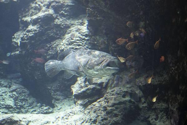 Okinawa 美ら海水族館 - 7