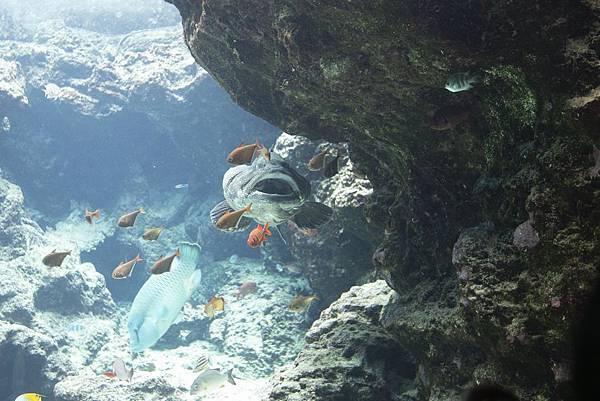Okinawa 美ら海水族館 - 8