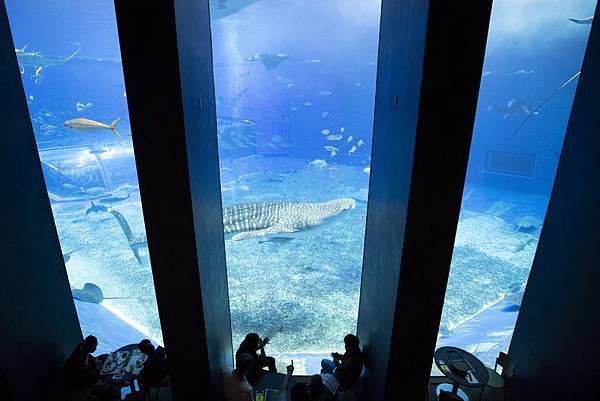 Okinawa 美ら海水族館 - 6
