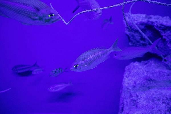 Okinawa 美ら海水族館 - 4